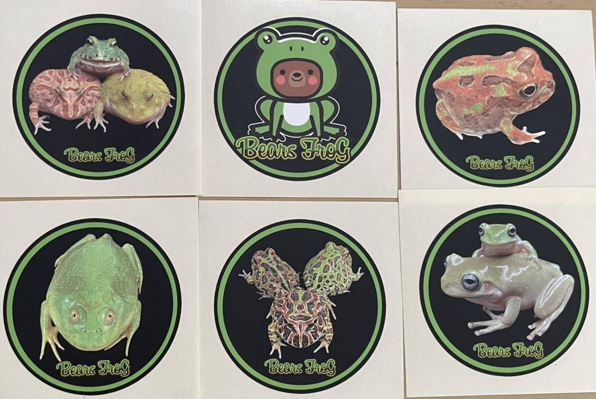 【Bears Frog】クランウェルツノガエル ミックスカラー ①オリジナルステッカー付き!_画像5