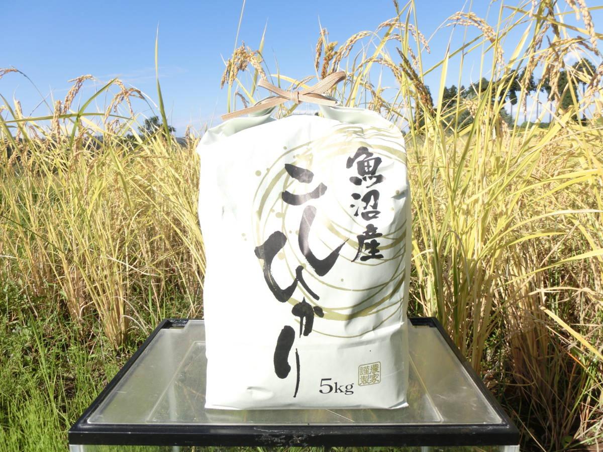 (令和2年収穫)<魚沼産コシヒカリ>・・(白米)5kg・・ 育苗~精米までワンチーム!!_育苗~収穫さらに発送まで