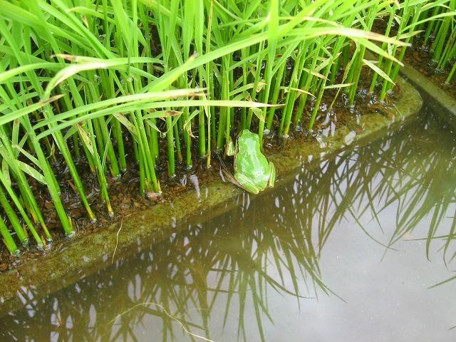 ( 令和2年収穫)<魚沼産コシヒカリ>・・(白米)10kg・・ 育苗~精米までワンチーム!!_画像3