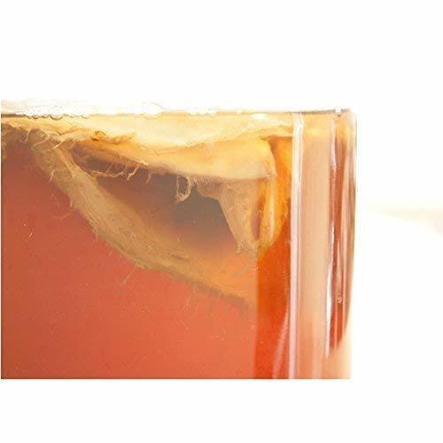 ferment works KOMBUCHA classic [国産無添加クラフトコンブチャ/紅茶キノコ/ストレートタイプ] 7_画像5