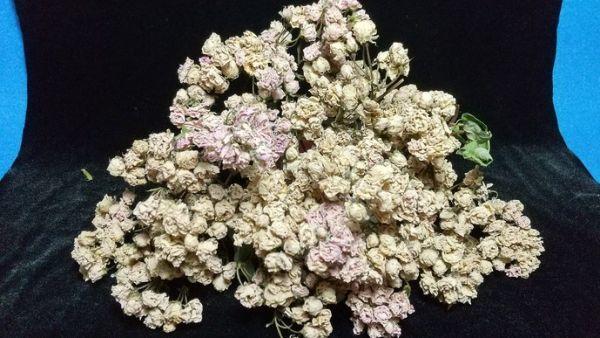 花9 バラ 自然乾燥 ドライフラワー_画像1