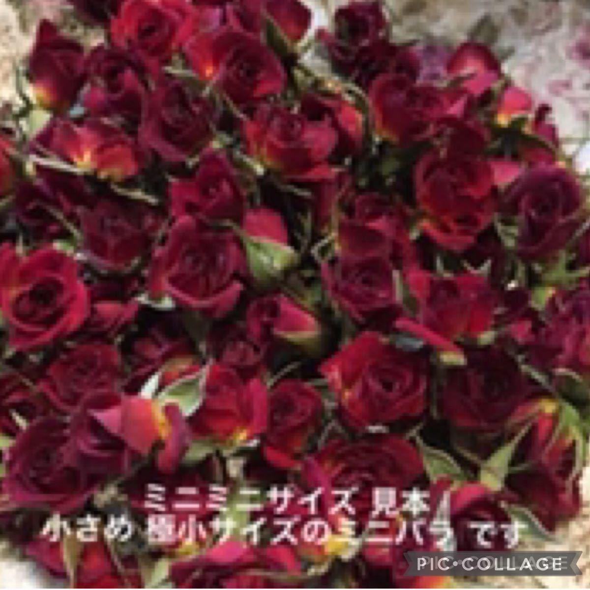 大容量 大特価!●ミニミニ薔薇30輪セット+おまけ5輪付き●ミニバラ ドライフラワー花材 素材●ハンドメイドに●レジン加工に