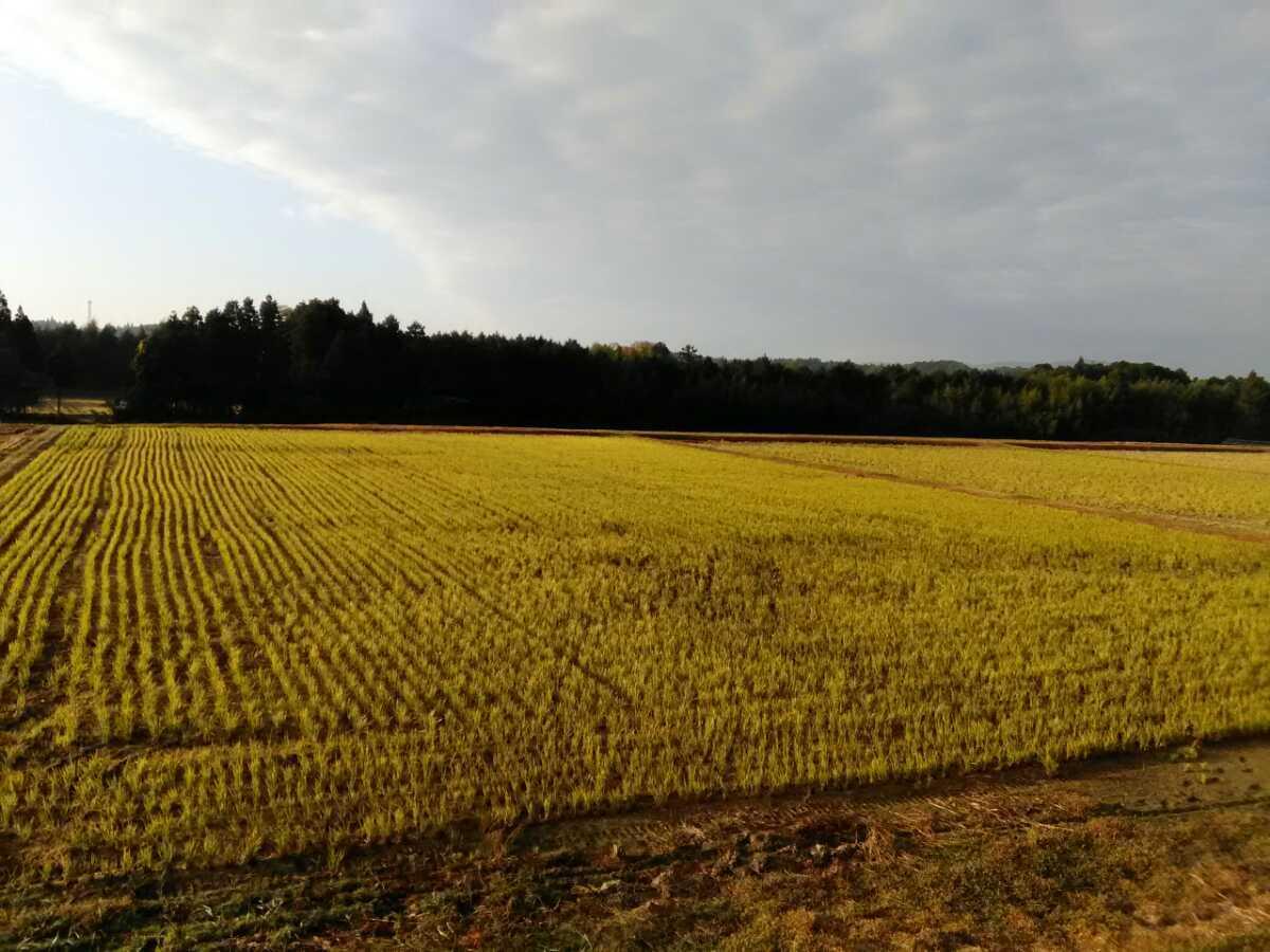 近江米 2020年産 キヌヒカリ 白米5キロ 1袋 送料込み(産地直送)_去年の秋の田んぼす