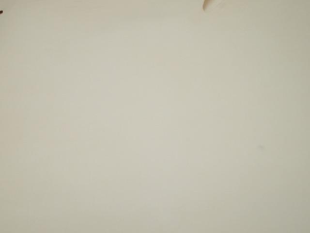 Y-21042679 国産 合成タンニン 純白ヌメ 190ds 半裁 2.3mm-3.0mm 白 1枚_画像2