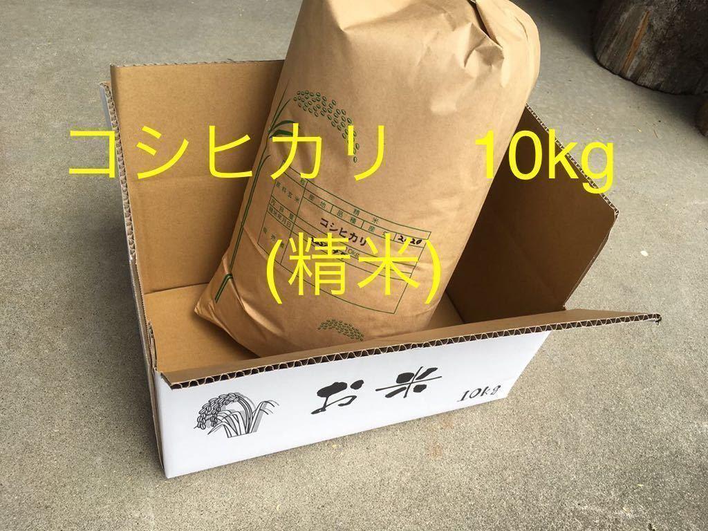 【令和2年産】送料無料 コシヒカリ 白米 10kg (no.10)_コシヒカリ
