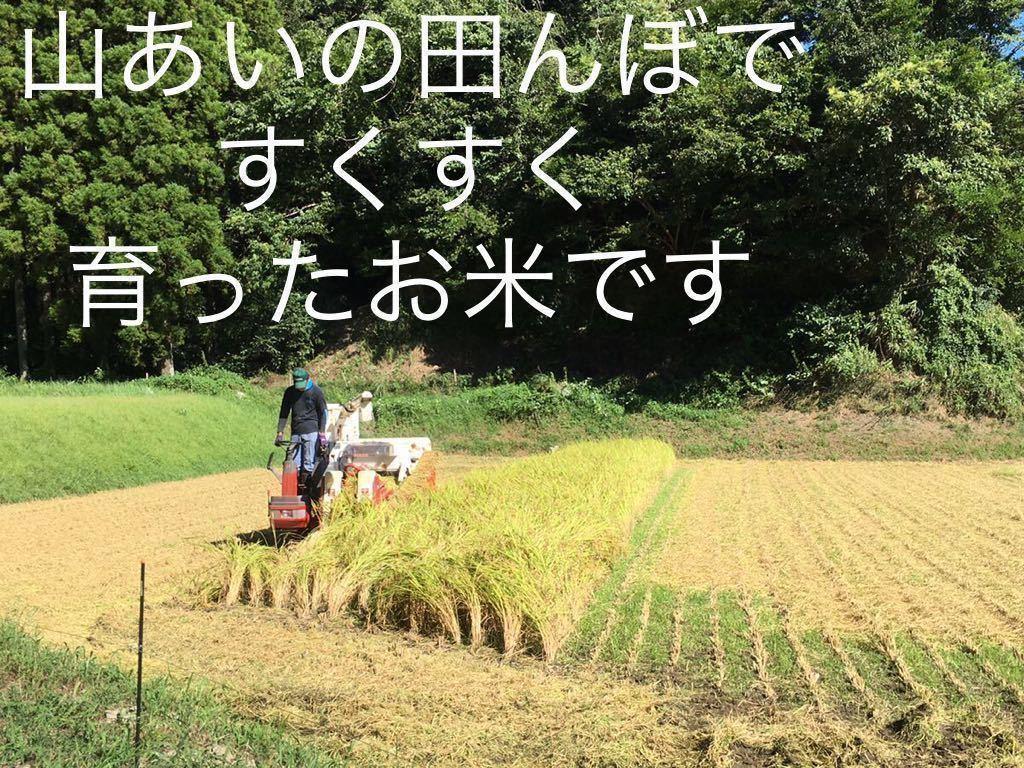 【令和2年産】送料無料 コシヒカリ 白米 10kg (no.10)_画像4