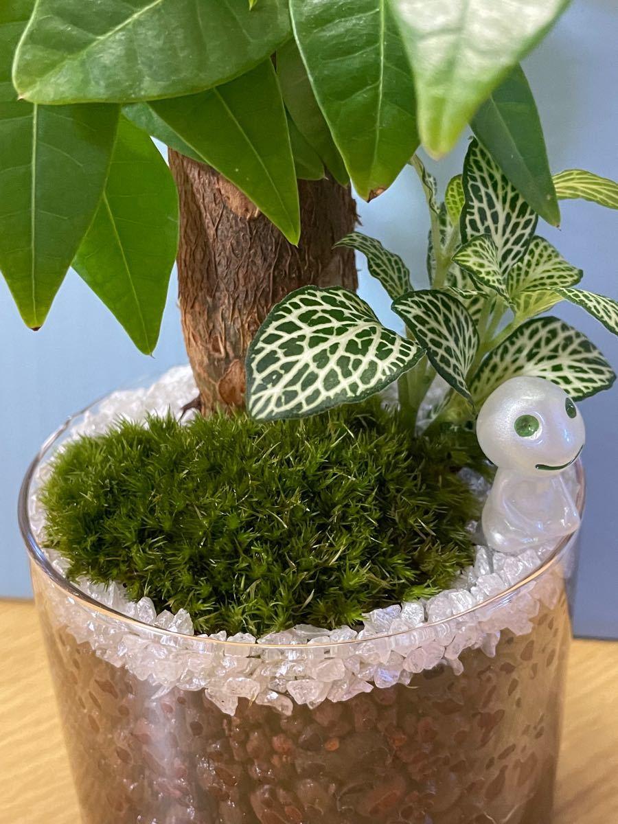 観葉植物 苔テラリウム 85