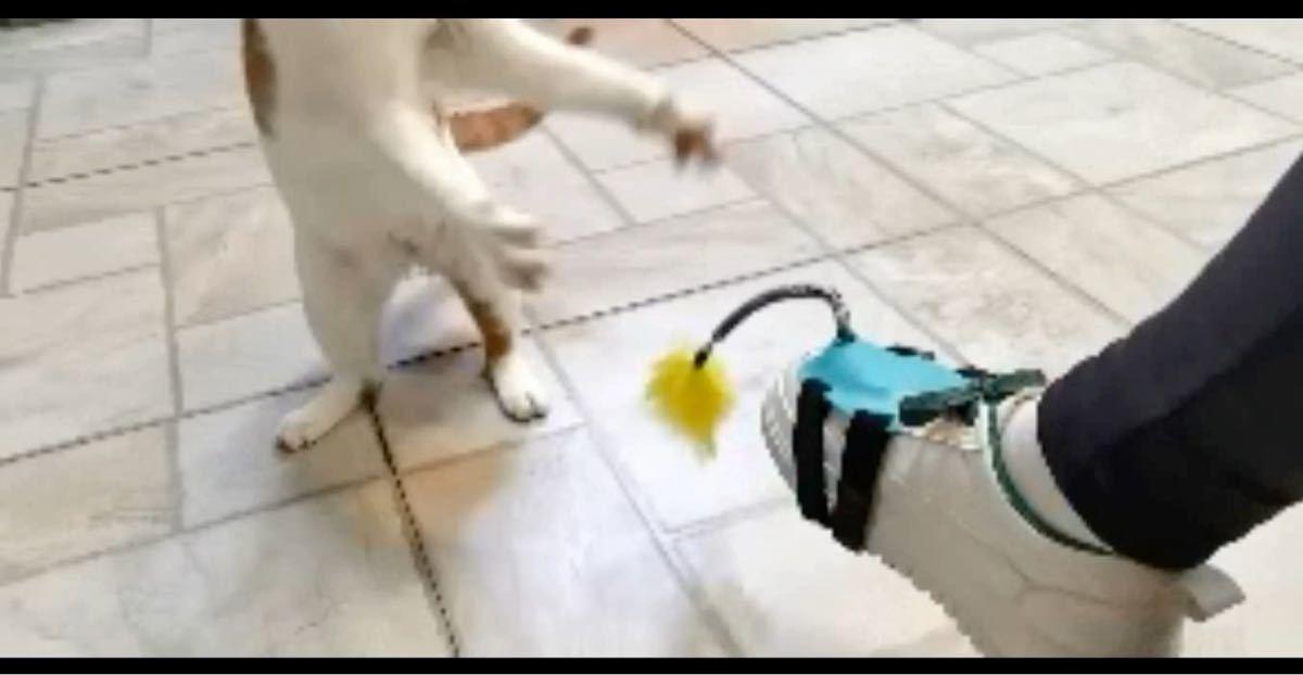 猫 じゃれ猫棒 おもちゃ 羽付き 猫じゃらし 釣竿 足を使ったおもちゃ 竿 じゃれ猫 コミュニケーション 遊び ネコ ペットグッズ