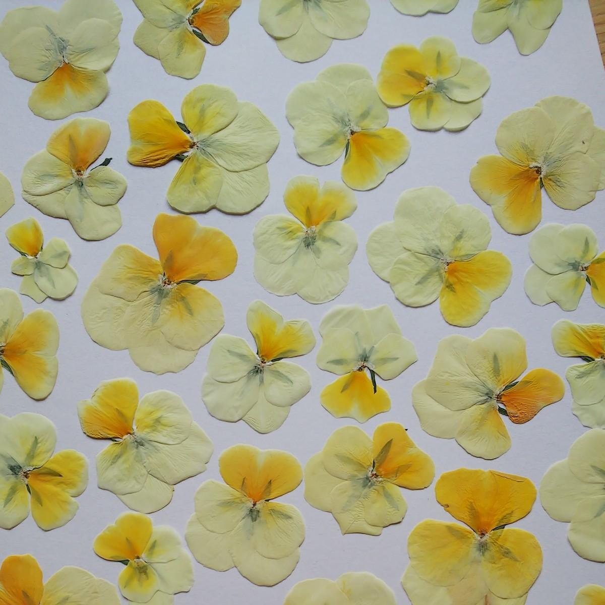 押し花 パンジー 小花 ハンドメイド 工作 花材 植物