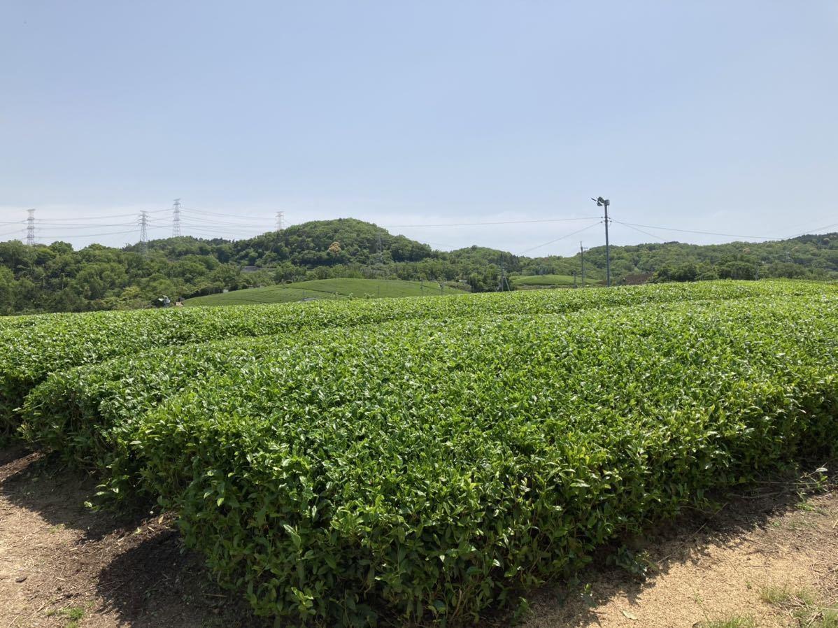 「新茶」ほうじ茶飲み比べセットL 手煎りほうじ茶・焙煎ほうじ茶Lサイズ 宇治茶100% 無農薬 化学肥料不使用 2021年産_画像5