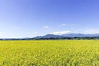 無洗米5kg 【精米】 [Amazon限定ブランド] 580.com 宮城県産 無洗米 つや姫 5kg 令和元年産_画像5