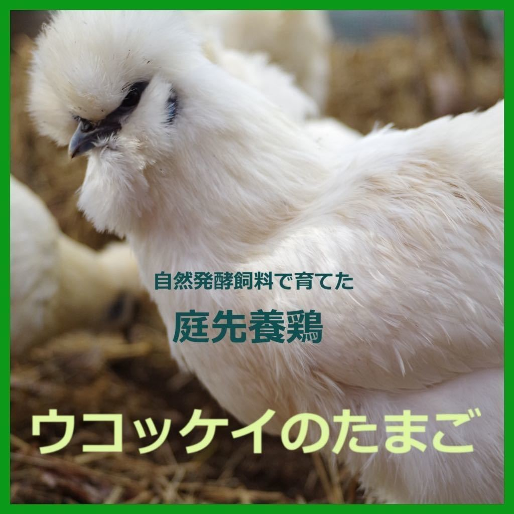 平飼い 烏骨鶏のたまご 6個 #有精卵_画像1