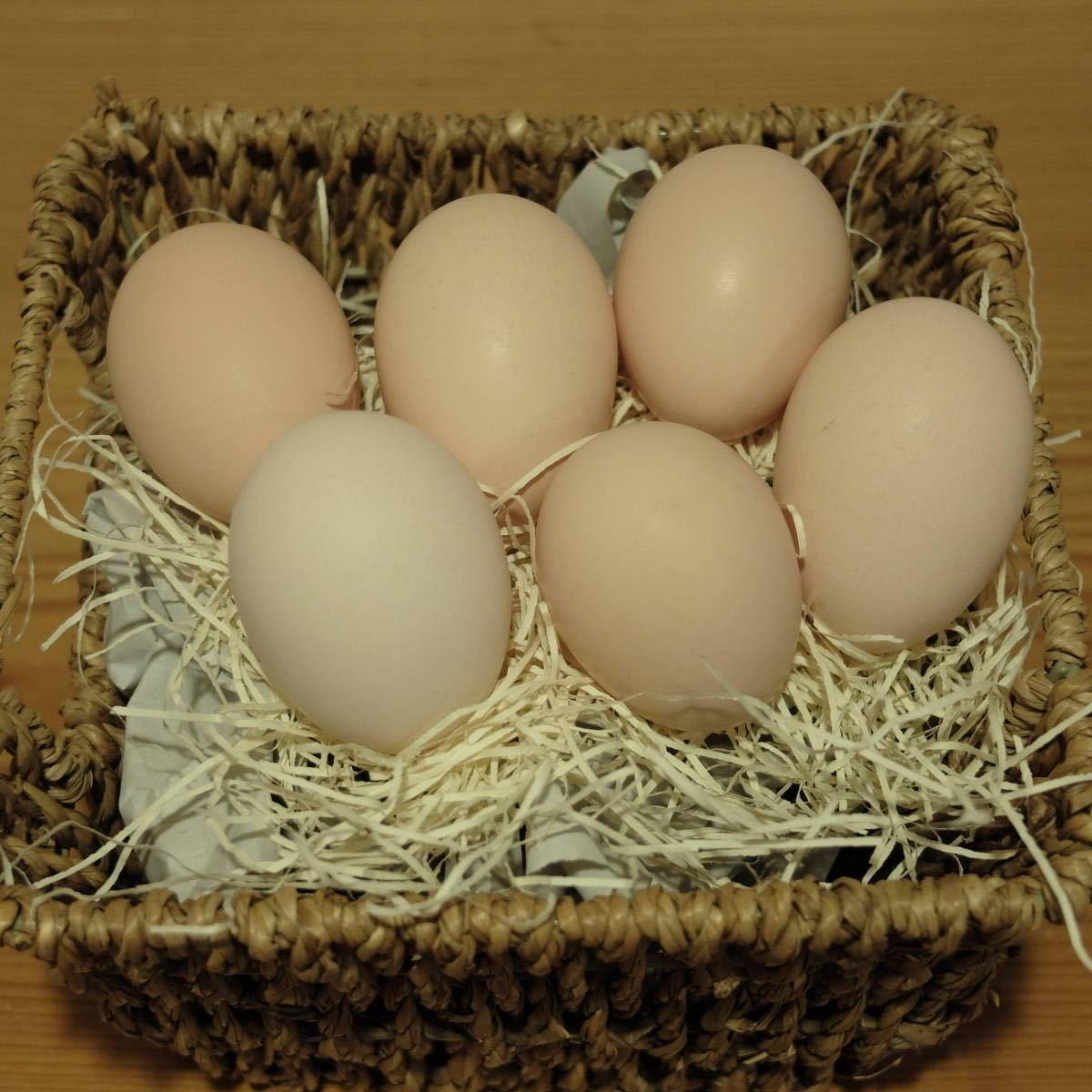 平飼い 烏骨鶏のたまご 6個 #有精卵_画像2