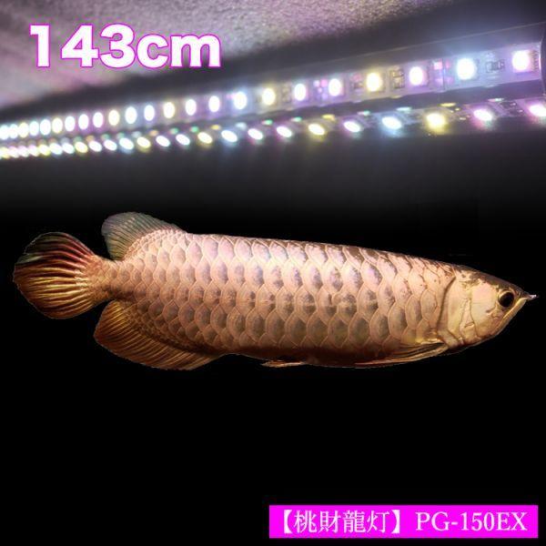 新発売 桃財龍灯 アロワナ ピンクゴールド 水中照明 LED 2列 ライト アクアリウム 金龍 大型水槽 150cm水槽用 でんらい PG-150EX_画像2