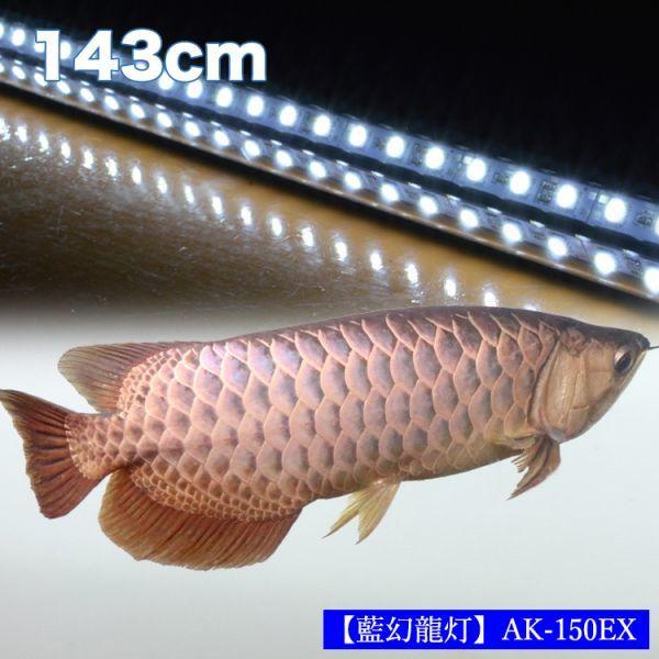 藍幻龍灯 アロワナ ワイルドブルー 水中照明 LED 2列 ライト アクアリウム 金龍 藍底過背金龍 大型水槽 150cm水槽用 でんらい AK-150EX_画像2