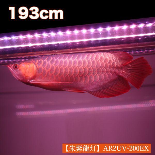 朱紫龍灯 アロワナ LED 2列 UV リバイブソード ライト 色あせ 色揚げ 大型水槽 水中照明 アクアリウム 紅龍 金龍 200cm水槽用 AR2UV-200EX_画像2