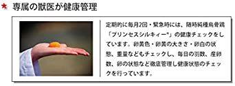 純種烏骨鶏「プリンセスシルキィーR」有精卵 10個入り(規格外品) 岐阜県、滋賀県産 安心、安全、栄養満点_画像8