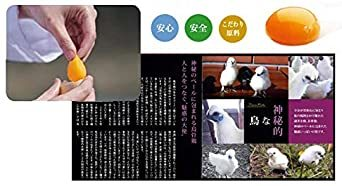 純種烏骨鶏「プリンセスシルキィーR」有精卵 10個入り(規格外品) 岐阜県、滋賀県産 安心、安全、栄養満点_画像3