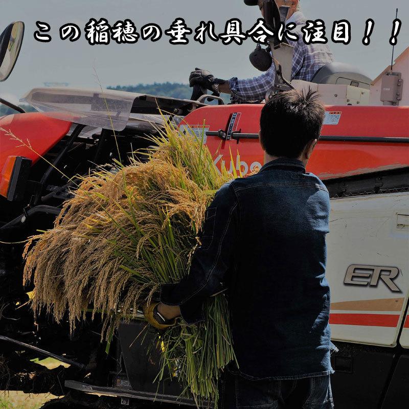 新米予約!!令和3年産 氷河米 コシヒカリ 白米5kg 山形県 庄内産 送料無料!_画像8