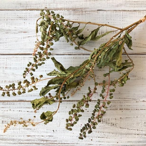 豊作Sale ヨウシュヤマゴボウの実付き枝 3本セット ドライフラワー花材 リース スワッグ そのままインテリアなどに 星月猫_画像1