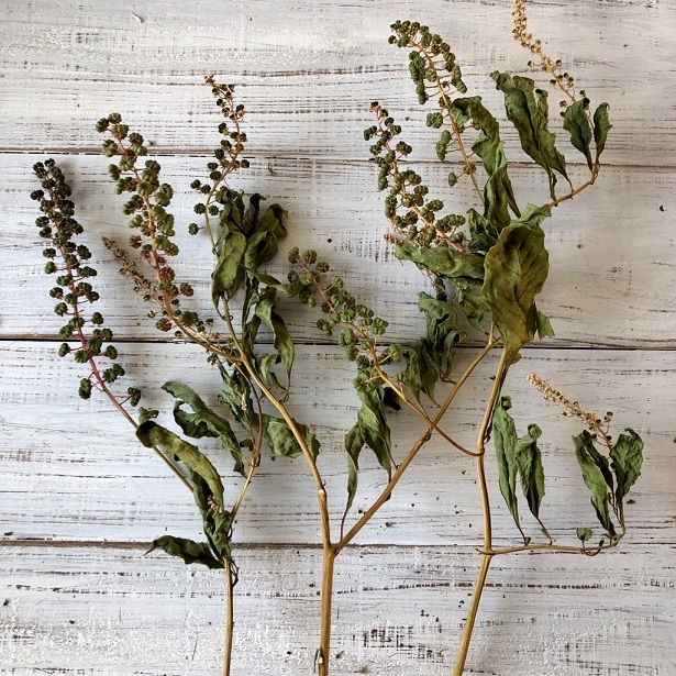 豊作Sale ヨウシュヤマゴボウの実付き枝 3本セット ドライフラワー花材 リース スワッグ そのままインテリアなどに 星月猫_画像3