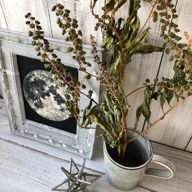 豊作Sale ヨウシュヤマゴボウの実付き枝 3本セット ドライフラワー花材 リース スワッグ そのままインテリアなどに 星月猫_画像4