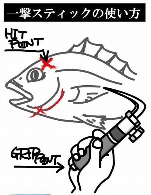 一撃スティック 旨い魚を持ち帰る 魚の脳〆用漁具_画像4