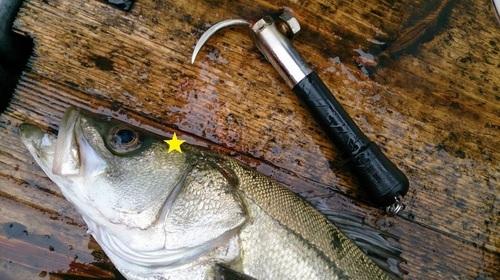 一撃スティック 旨い魚を持ち帰る 魚の脳〆用漁具_画像10