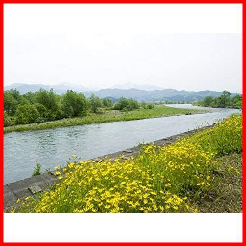 【精米】魚沼産 白米 コシヒカリ 5kg 令和2年産_画像2