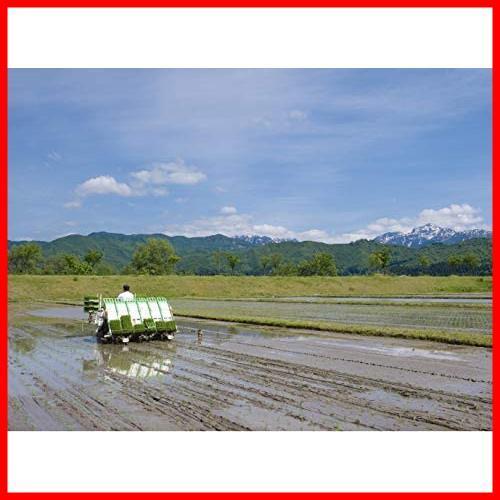 【精米】魚沼産 白米 コシヒカリ 5kg 令和2年産_画像3