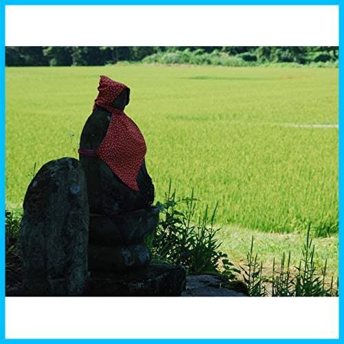 【精米】魚沼産 白米 コシヒカリ 5kg 令和2年産_画像4