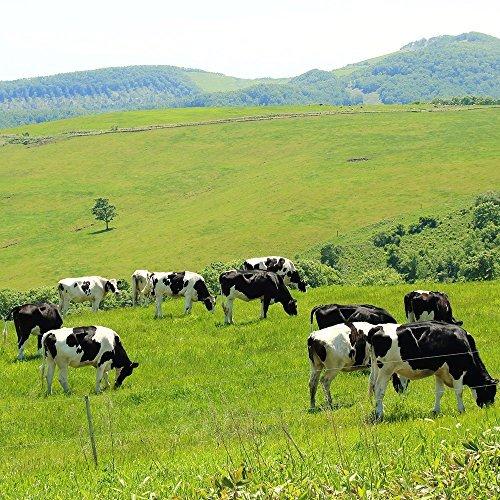 Amazon 限定 ご飯のお供 北海道産 十勝 牛しぐれ 90g瓶 2個セット 北国からの贈り物_画像8