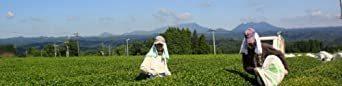 宮崎茶房(有機JAS認定、無農薬栽培)、有機釜炒り茶、緑茶(ティーバッグ) 5g×20、_画像3