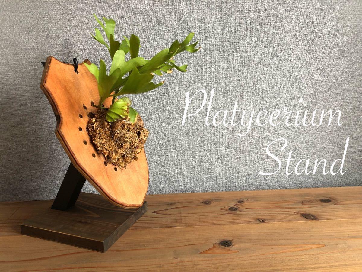 Platycerium-stand ビカクシダスタンド / ライトウォルナット