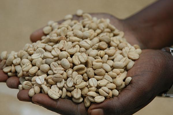 自家焙煎☆自然栽培ウガンダコーヒー(200g)X2袋☆ウガンダで育った無肥料無農薬栽培コーヒー豆☆最高ランクのAA級☆貴重なアラビカ種☆