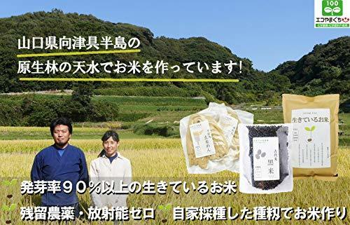 新品1kg 500g お試し250g 生きているお米の黒米 無農薬 有機栽培の古代米 残留農薬 放射能ゼロ 真空チャA44S_画像2