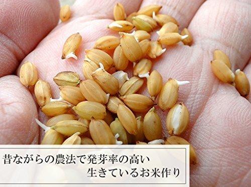 新品1kg 500g お試し250g 生きているお米の黒米 無農薬 有機栽培の古代米 残留農薬 放射能ゼロ 真空チャA44S_画像3
