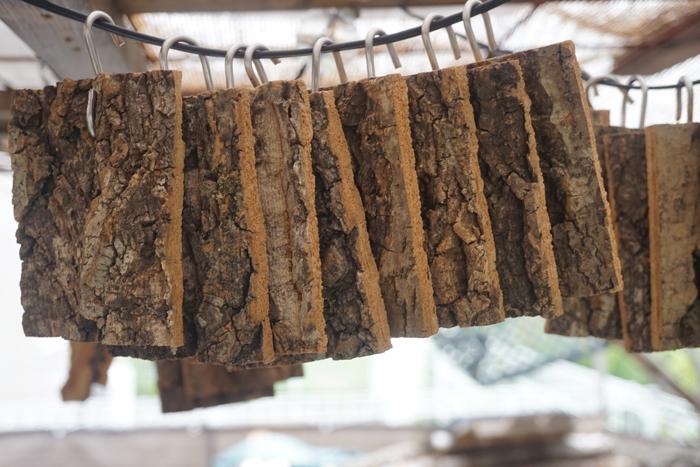 コルク 樹皮 フック付き (8×10cm) 1枚 チランジア エアープランツ 洋蘭 小型_画像2