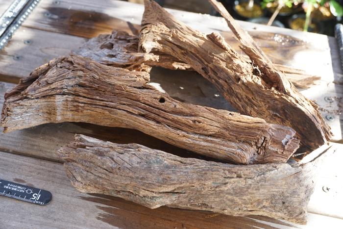 洋蘭 着生植物に 流木 Mサイズ 1個  エアープランツ チランジア ラン 熱帯魚 レイアウト 爬虫類 両生類_画像2