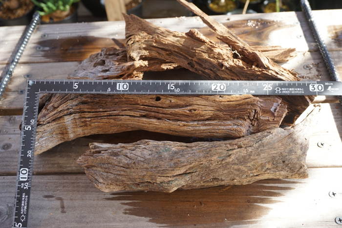 洋蘭 着生植物に 流木 Mサイズ 1個  エアープランツ チランジア ラン 熱帯魚 レイアウト 爬虫類 両生類_画像3