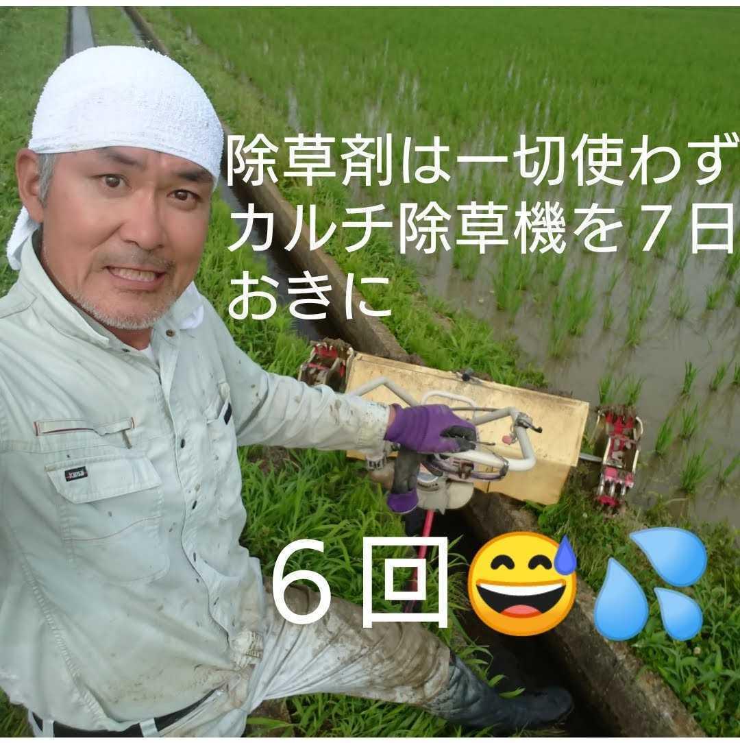 自然栽培米 米の旨みたっぷり 氷温熟成 つや姫 令和2年産 山形県産 庄内米 無施肥 無農薬 玄米 25kg (正味24.6kg) 農家直送_画像のカルチ5輪ですが、今は9輪に
