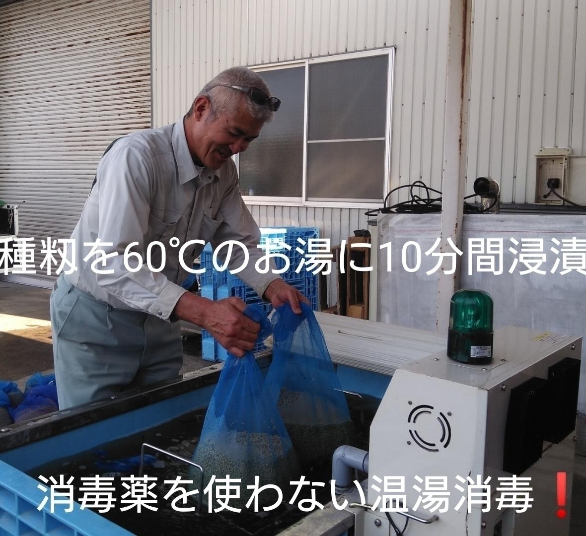自然栽培米 米の旨みたっぷり 氷温熟成米 つや姫 令和2年産 新米 山形県産 庄内米 無施肥 無農薬 玄米 25kg (正味24.6kg) 農家直送_1回40kgなのでかなり時間かかる作業