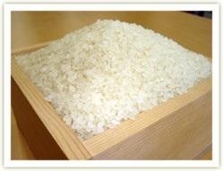 令和2年産 新潟コシヒカリ精白米4kg【特別栽培米/減農薬・減化学肥料栽培】_画像1