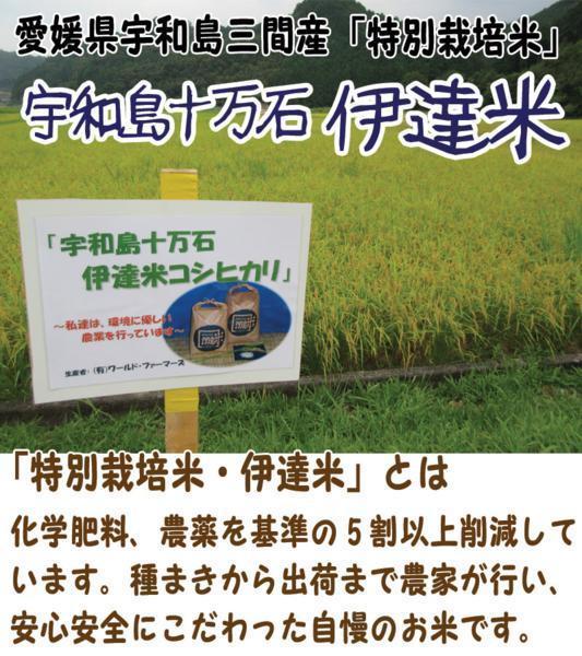 愛媛 三間産 伊達米 減農薬 特別栽培米 令和2年産 ( もち米 ) 白米 25kg 送料無料 百姓から直送 宇和海の幸問屋_伊達米
