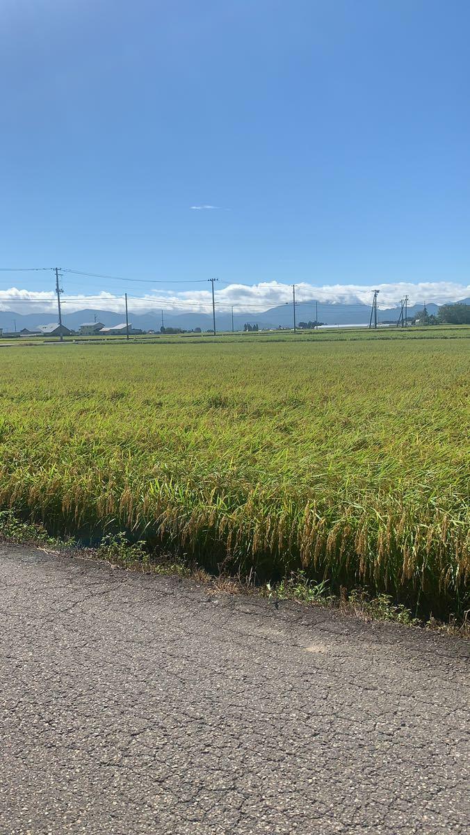 コシヒカリ 会津産 10キロ 玄米 令和2年産_画像2