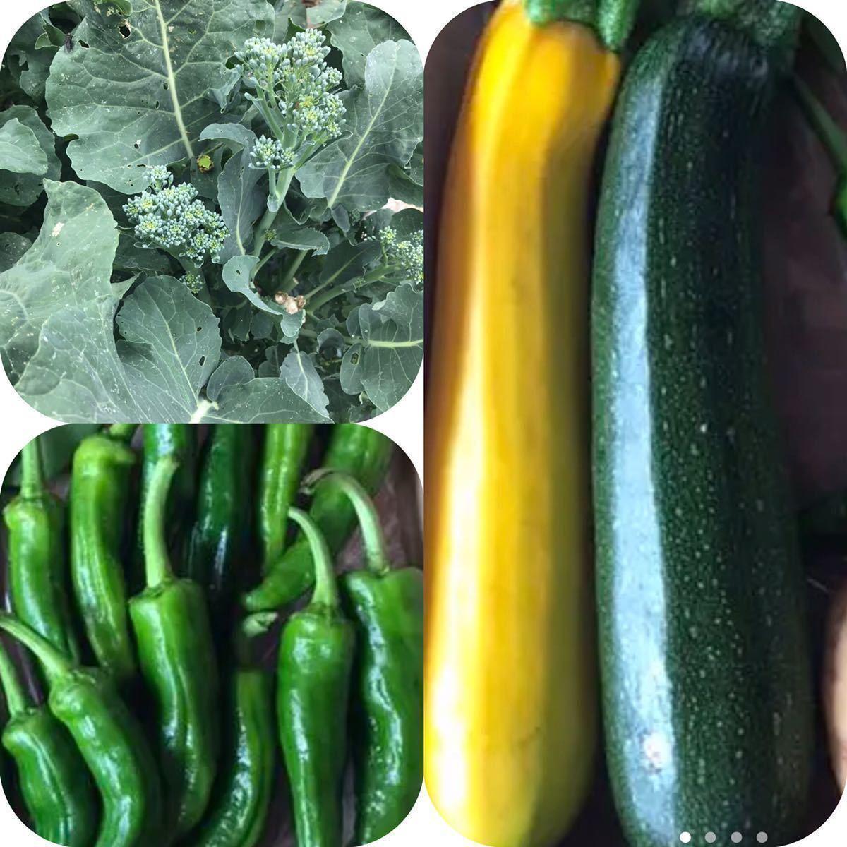 野菜 詰め合わせ 80サイズ お楽しみボックス_画像5