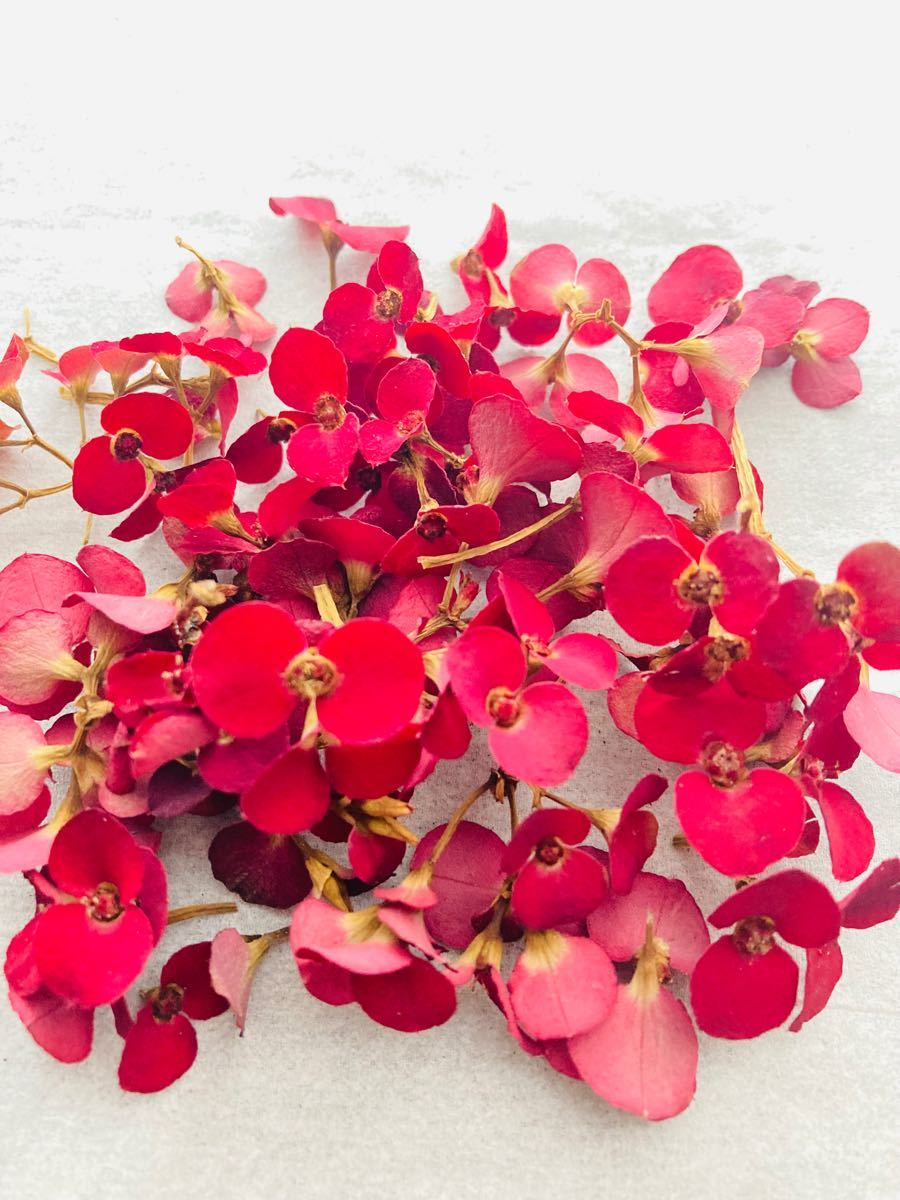 花キリン ドライフラワー 赤花 花材  ハーバリウム リース アロマサシェ アクセサリー ハンドメイド