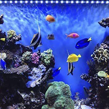 Etelux LED水槽ライト気泡 水中アクアリュムランプ 水槽用照明 装飾 観賞魚 熱帯魚 酸素補給 長寿命 省エネ 水陸両用_画像2