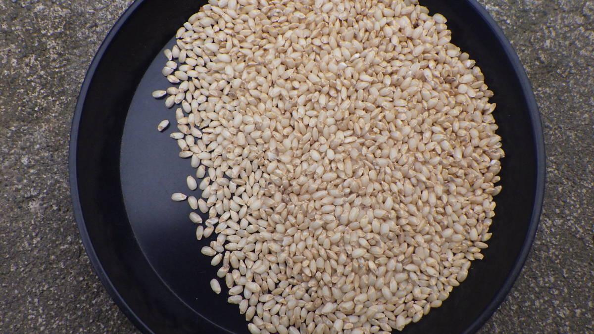 ☆宮城県産 発芽玄米 金のいぶき 令和2年度産 玄米 4.5kg☆_画像1