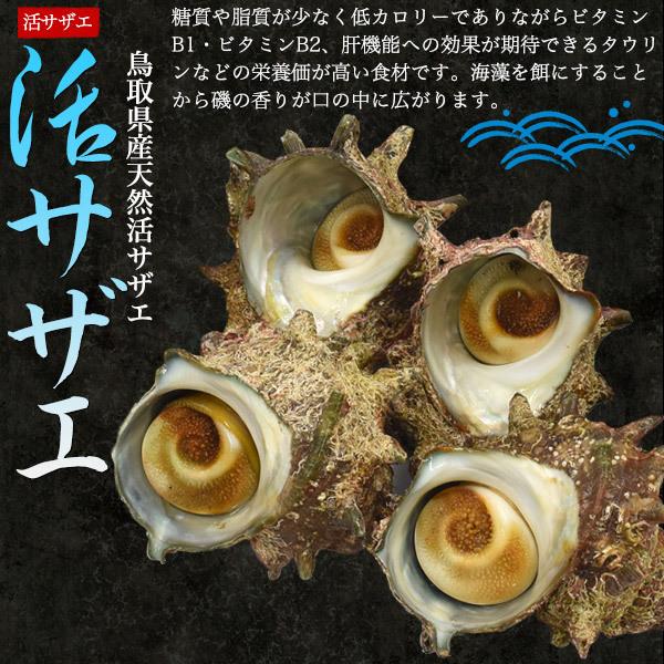 生 食材■ 鳥取県産 天然岩牡蠣 「 夏輝 」+ 活サザエ 詰め合わせセット (合計2kg前後)■国産 新鮮 貝 魚介類 かき 栄螺 ■ クール便配送_画像5